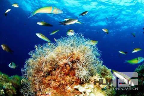 在6.8世界海洋日,华全发电机组选择了出海远航